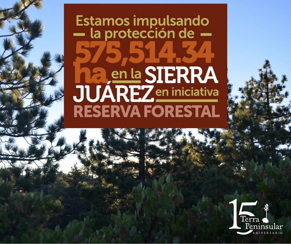 Estamos impulsando la protección de 575 514.34 hectáreas en la Sierra de Juárez en iniciativa de Reserva Forestal.
