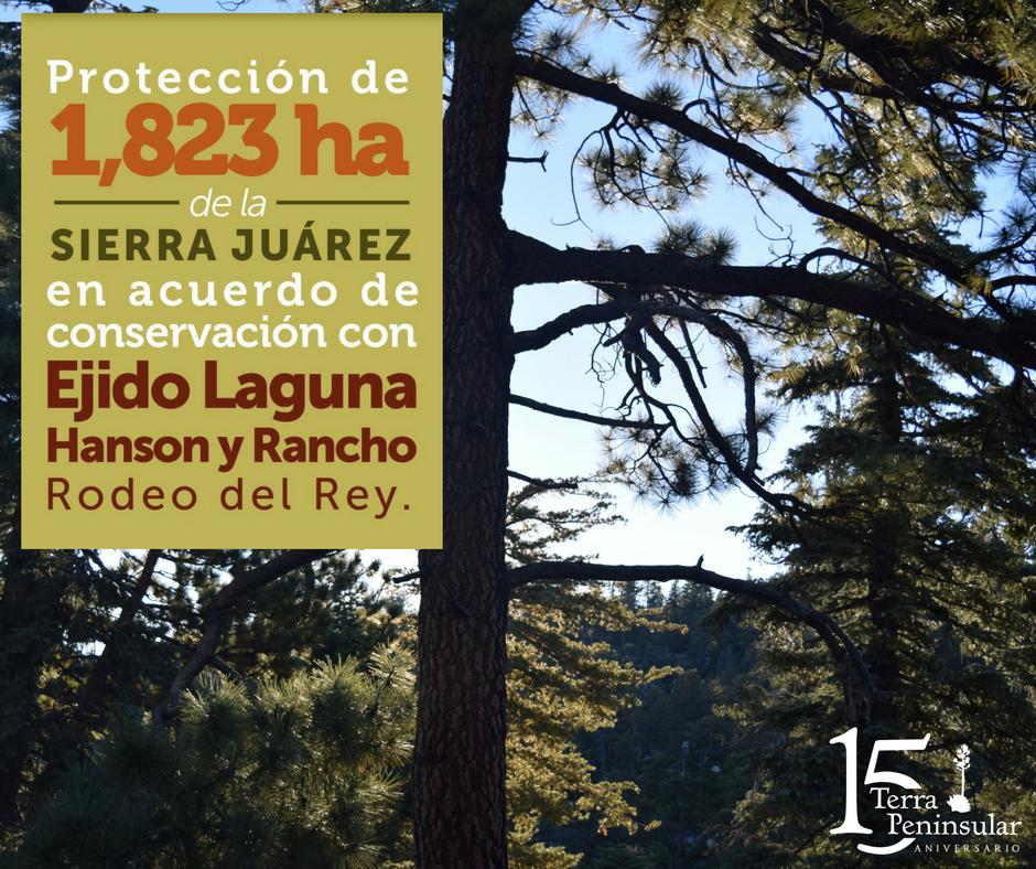 Protección de 1 823 hectáreas de la Sierra de Juárez en acuerdo de conservación con Ejido Laguna Hanson y Rancho Rodeo del Rey.