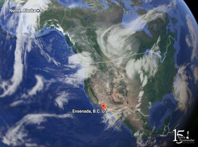 Mapa muestra ruta del playero rojizo desde Nome, Alaska hasta Ensenada, B.C. Foto: Google Maps