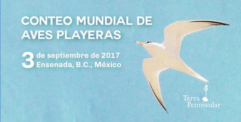 28-08-17 Terra Peninsular invita al Conteo Mundial de Aves Playeras
