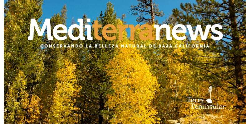 Mediterranews agosto 2017