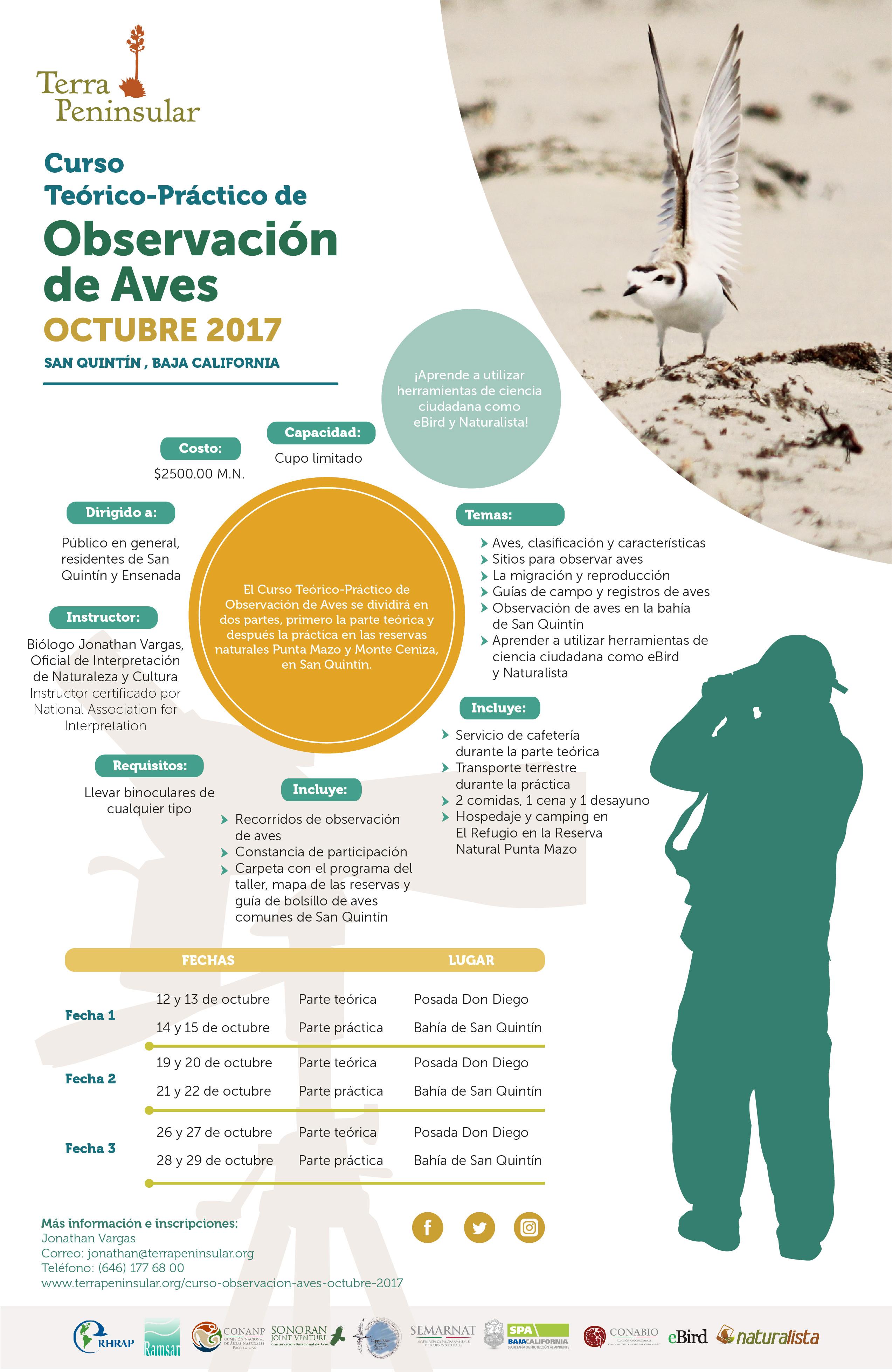 Curso de observación de aves en San Quintín