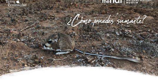 Ayúdanos a proteger a la rata canguro de San Quintín