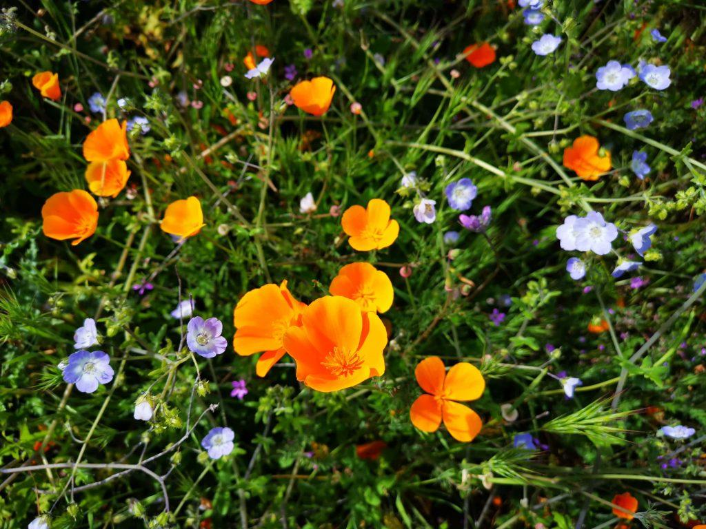 Seguramente viste las fotos en redes sociales, internet o incluso en la tele: campos inmensos pintados de naranja, morado, azul, amarillo y rosa.