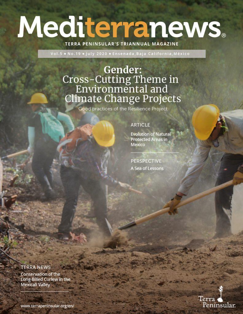 Mediterranews-issue-19