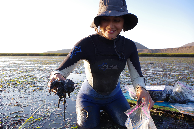 Proyectos de conservación marina
