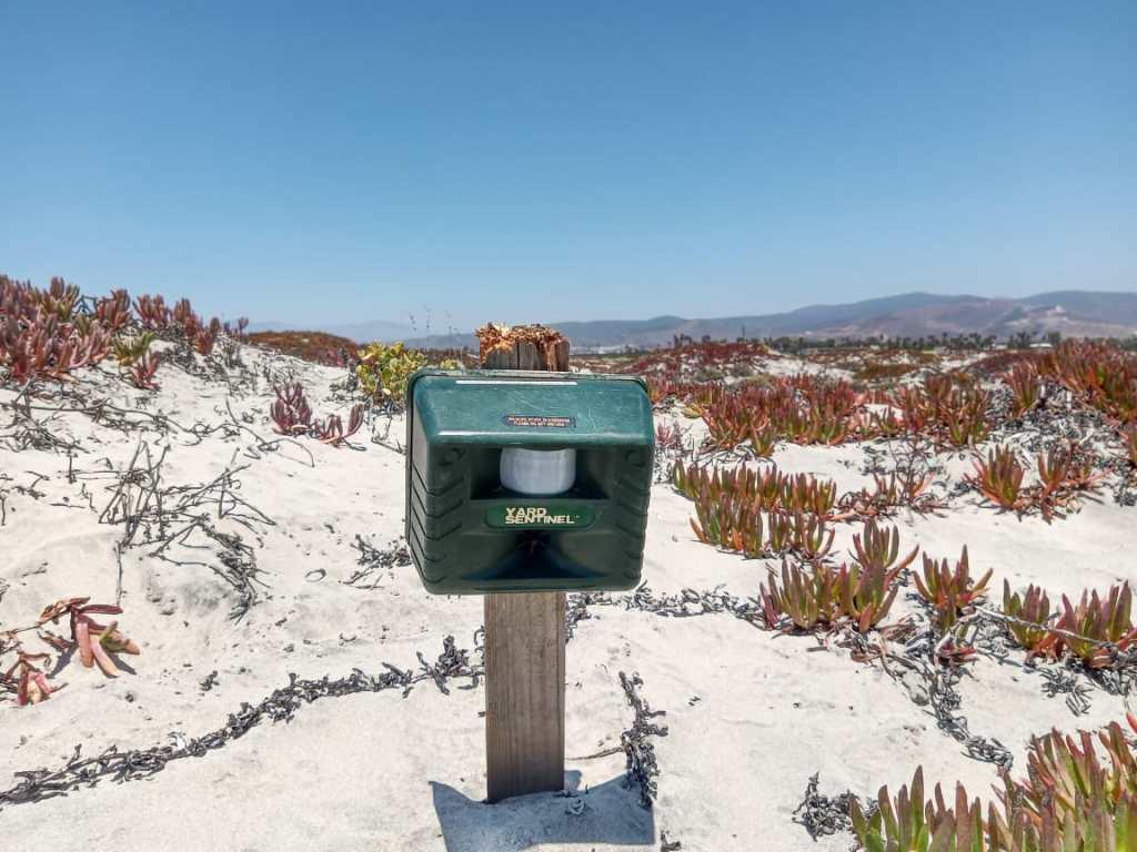 Bocinas ultrasónicas utilizadas como estrategia para ahuyentar depredadores terrestres como coyotes en la lengüeta arenosa de Punta Banda